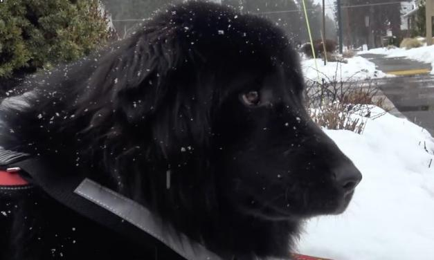L'association Hope for Paws est venue sauver ce magnifique chien abandonné.