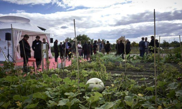 Des légumes rustiques relancés grâce à Institut Vavilov, mémoire russe des semences