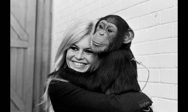 Brigitte Bardot, le serment fait aux animaux. Magnifique reportage.