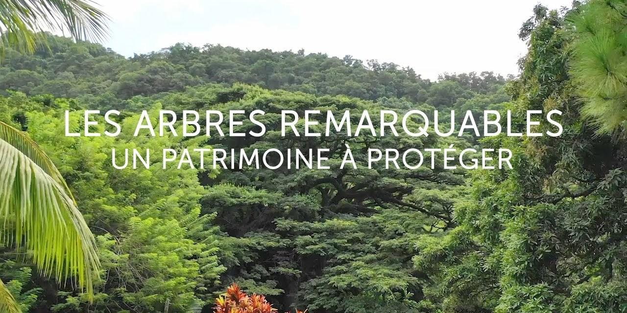 BANDE ANNONCE Les Arbres Remarquables, un patrimoine à protéger