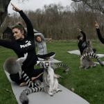 Au Royaume-Uni, cet hôtel propose des cours de yoga en compagnie de lémuriens
