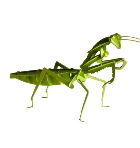 Paper Model – Mantis Religiosa