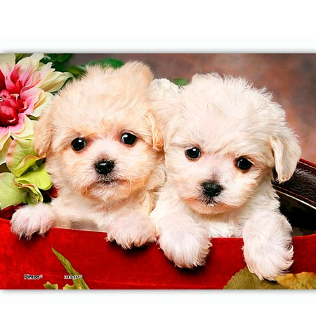 Puzzle 150 MINI – Piezas de Plástico – Puppies in Gift Box – Pintoo