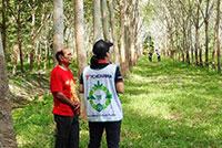 横浜ゴムがタイ・スラタニ地区で行う天然ゴム農園調査