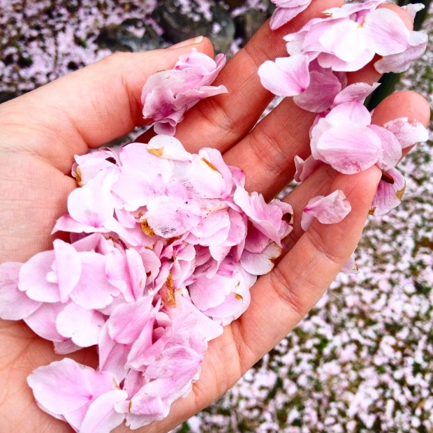 A handful of pink petals