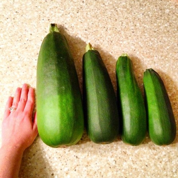 Zucchini comes in all sizes