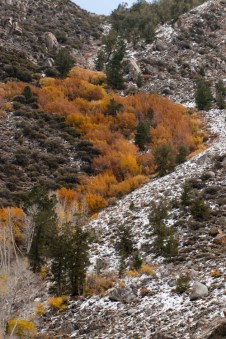 Aspens often follow the creeks that run down canyons in this area, and they look like rivers of fire when their autumn color is on.