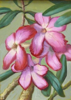 Pink Blooms, oil on panel, 7x5 in.