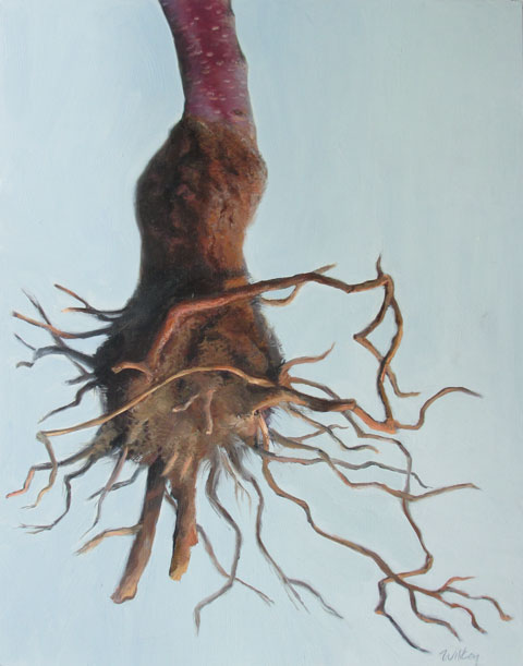 Cherry Tree Root, oil on panel, 16x12 in