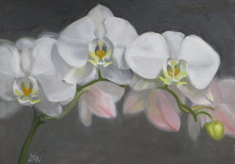 painting of white orchid blooms