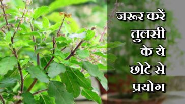 Try These Small Experiment of Tulsi Plant