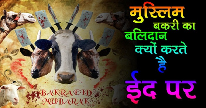 Why The Goat Is Sacrificed On Bakra Eid