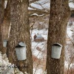 New England Photography of sleepy Hollow farm sap buckets