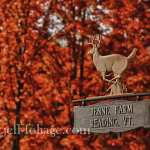Vermont's fall foliage on the Jenne farm near Woodstock Vermont