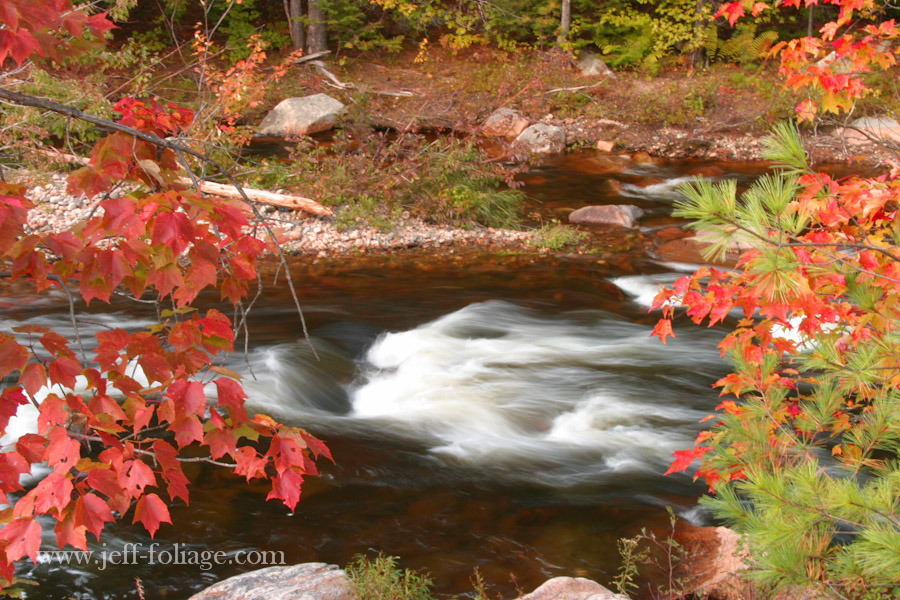 A Tamworth NH stream with early New England Foliage hanging over the water