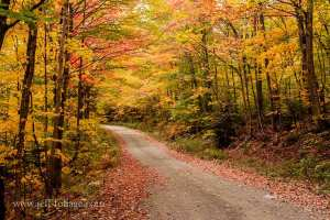 simple dirt road passing underneath a canopy of yellow and orange Maple trees in Maine