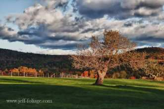 Folger-maine-farm-apple-tree-2