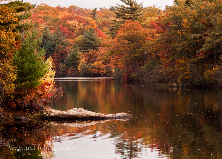 a large rock like the snout of an alligator sticks out into Birch pond breaking up the reflection of the new England fall foliage colors
