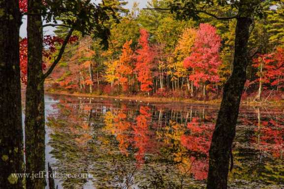 The fall foliage reflects on the waters of the Quabbin reservoir. The lonely solitude of the fall foliage reflected in the surface of the pond gives a sense of seclusion. Where the viewer almost seems to be on the side of the pond by themselves.