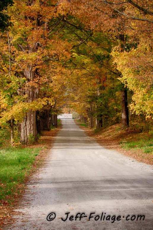 Near Brandon Vermont, this foliage covered back road in the late afternoon was very colorful.