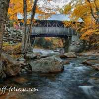Fall foliage comment to win-April