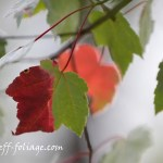 Early fall foliage colors in NH