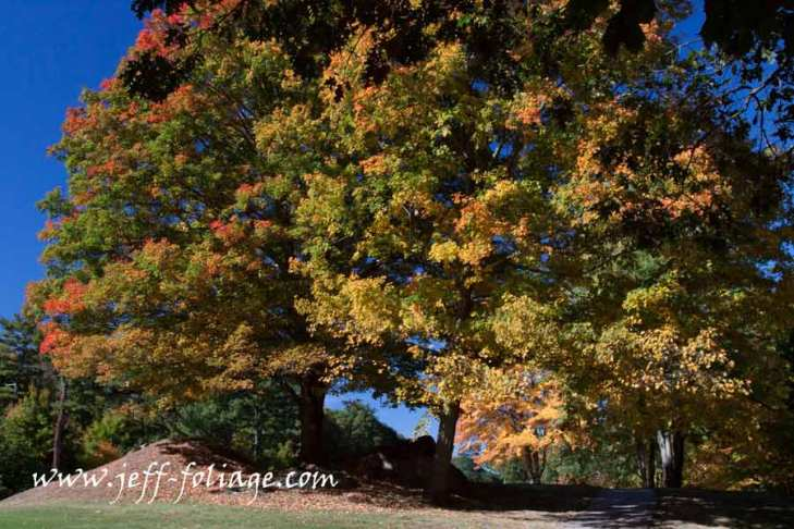 Early fall foliage color in Peabody Oct 8 2013