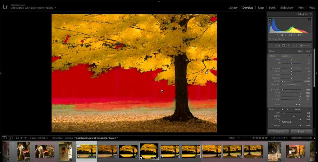 tips for improving fall foliage