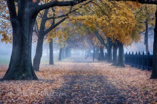 Salem foggy morning with August comment winner