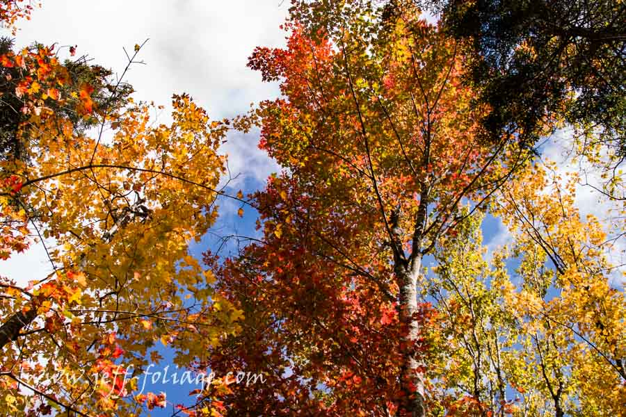 Looking above Jefferson Notch road turns your attention to the sky above but mostly it turns your eyes to the wondrous colors of autumn. Trees in every shade of red, orange, and gold...
