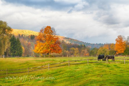 autumn at the March Billings farm