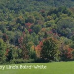 Early fall color by Linda Baird-White