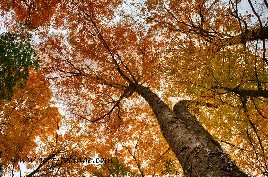 Vermont fall foliage in Marsh-Billings