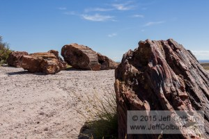 Petrified-Forest0102