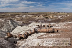 Petrified-Forest0206