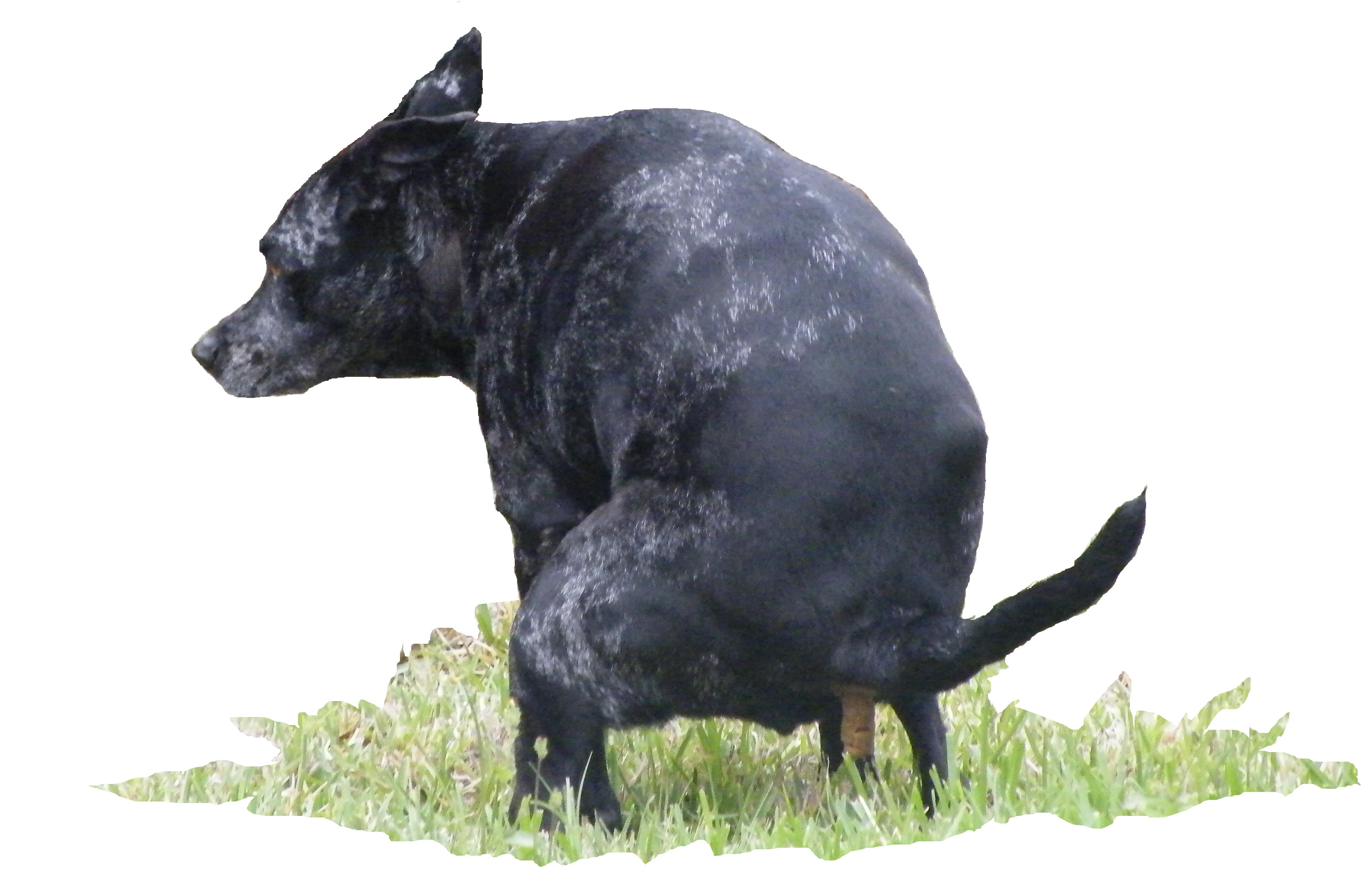 The pooping dog!.