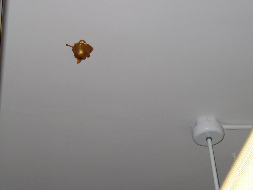 A gold squishy pig on the ceiling.