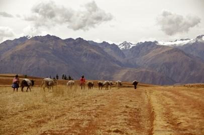 alpine-farmers_5000510334_o