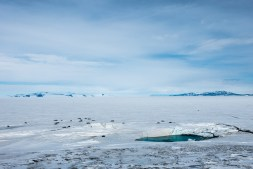 On the outer lap of the ob hill loop, cracks in the Ross Sea give way to lots of seals coming up onto the surface of the ice to warm up and relax.