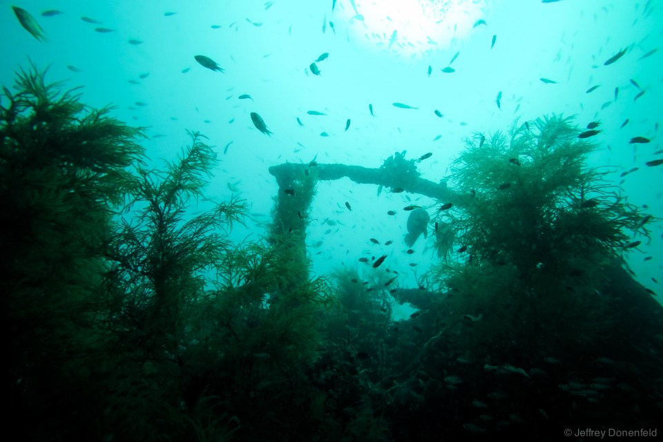 An incredible amount of fish swim on a the wreck of a Japanese battleship in Coron, Philippines.