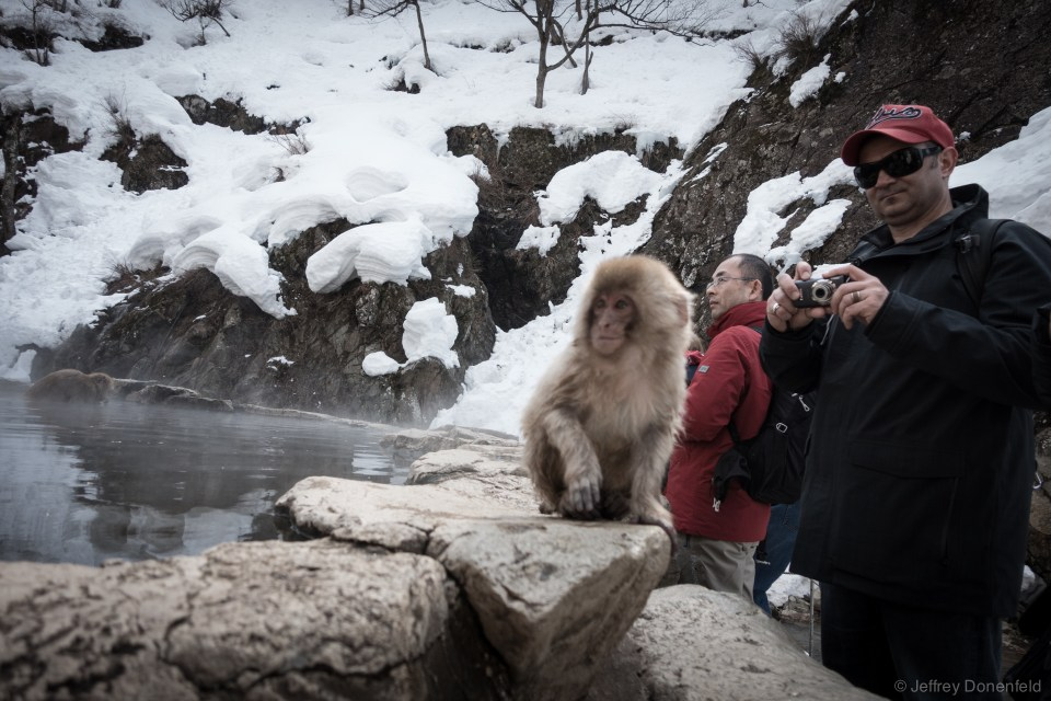 Lots of snow monkeys, lots of tourists, lots of photos.