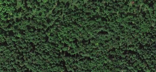 satellitetrees-web
