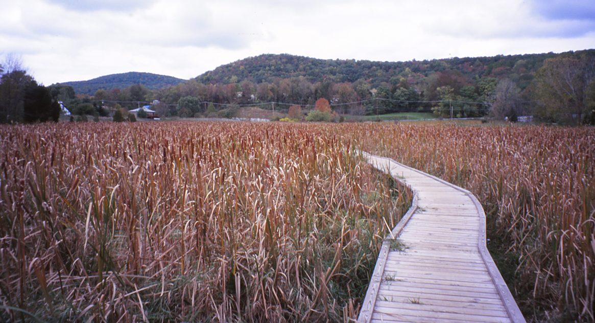 Photo of the Pochuck Boardwalk (part of the Appalachian Trail in New Jersey). ©2016 www.jeffryanauthor.com