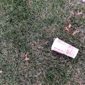 Photo of litter
