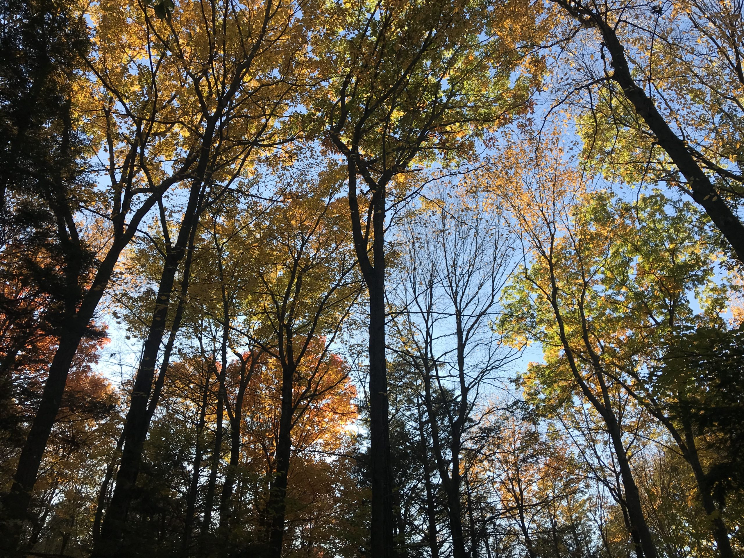 Autumn view from Robert Frost Trail
