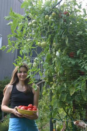 Pepper Amp Tomato List