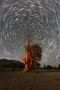Star trails over Bristlecone pine,  night photography workshops