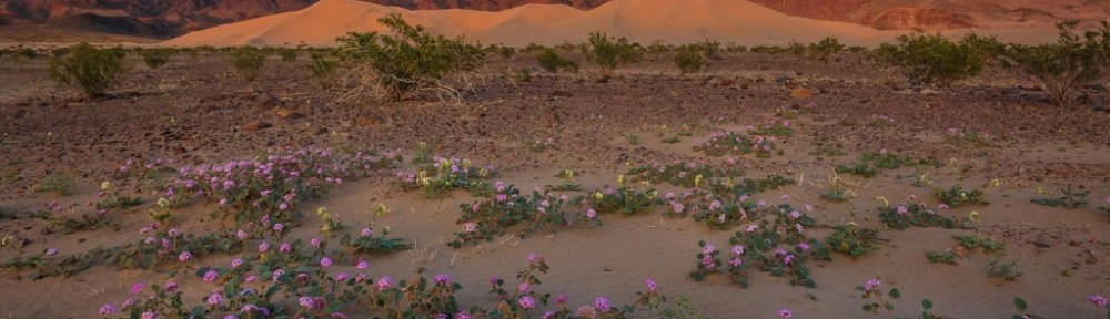 photography workshops in Death Valley