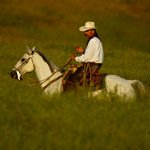 Cowboy in the tall grass on horse - Jeff Wendorff Photographer