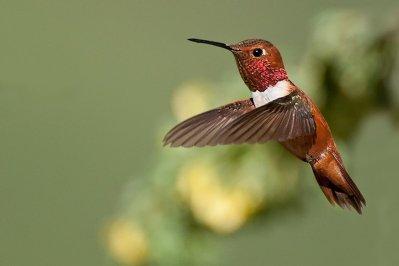 Easy Hummingbird Photography